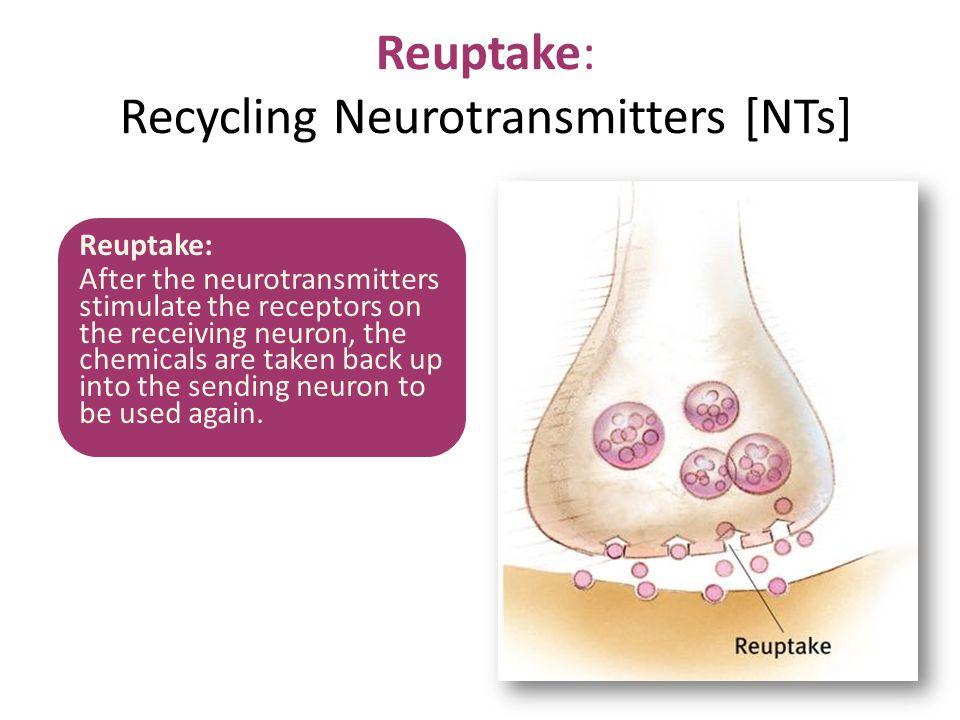 Reuptake: Recycling Neurotransmitters [NTs]